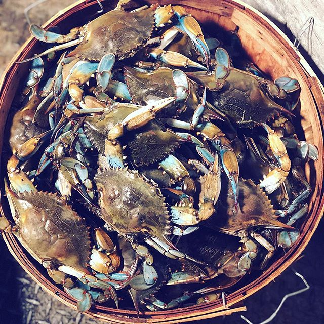 Happy 4th of July! Come get your maryland crabs from DR Seafood to celebrate!!! 🇺🇸