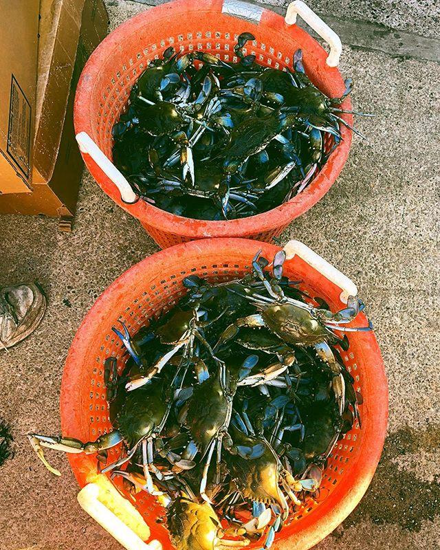 Got crabs ?!? 🦀 @peta