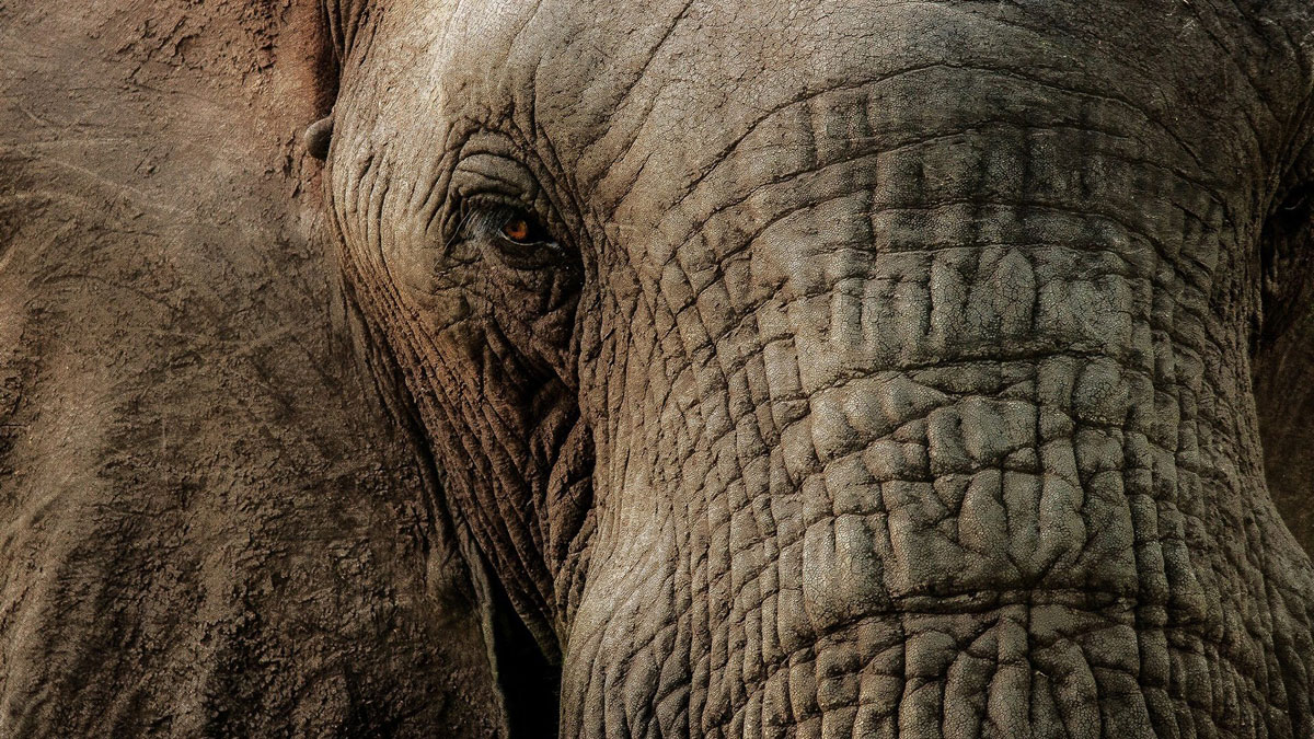 How Can Elephants Help Us Prevent Cancer? - May. 3, 2017