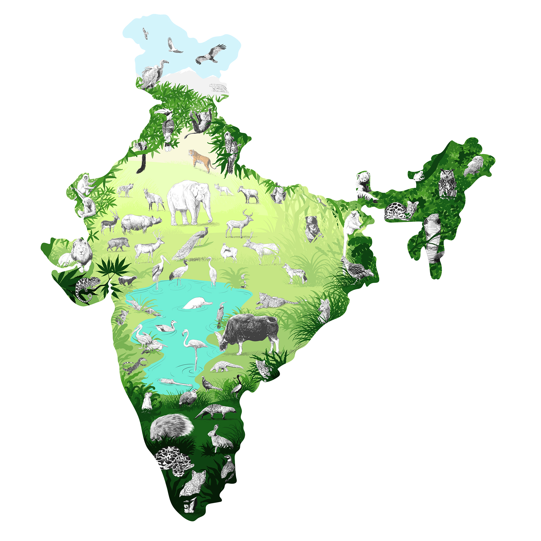 "1972 :  ""Indian Legislature recognizes the importance and beauty of its country's biodiversity with the Wildife Protection Act."" ~  Rohan Joglekar"