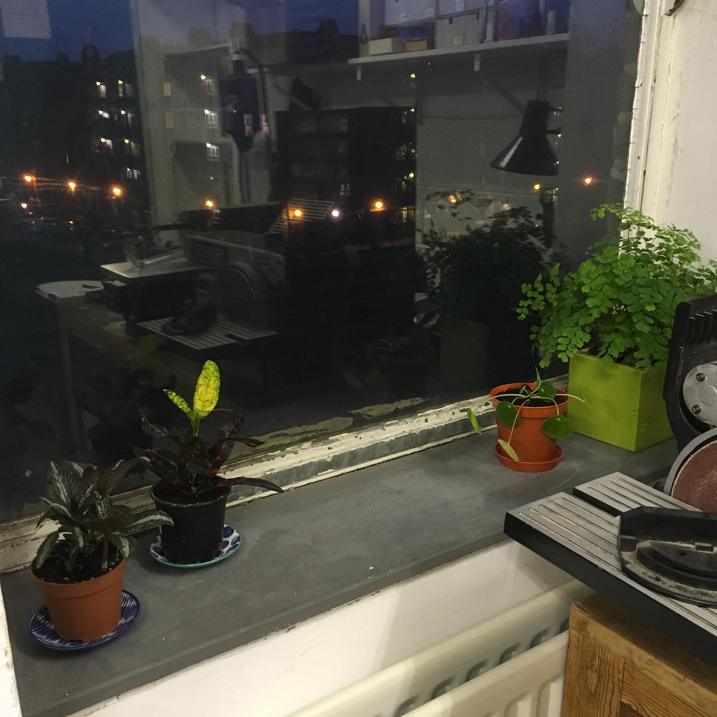 Plants on the window sill.