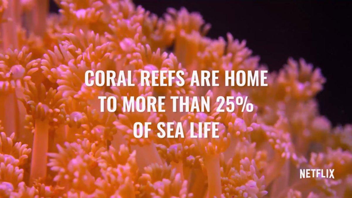 chasing-coral-screenshot-crop 2.jpg