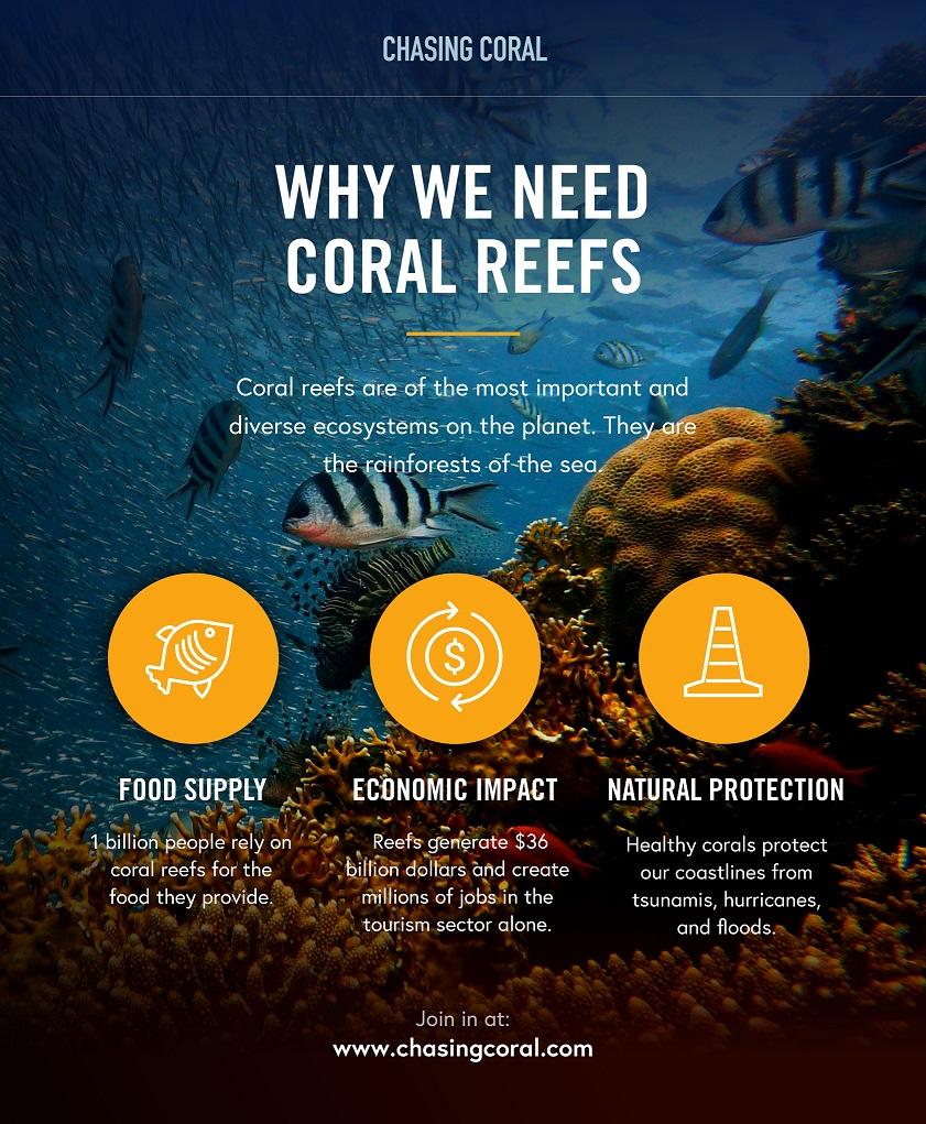 coralinfographic.jpg