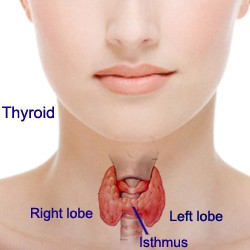 Look in the Mirror. - You can see if your thyroid is enlarged by looking in the mirror.