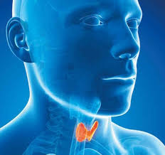 Over the Counter Thyroid Boosting Supplements do Work. -