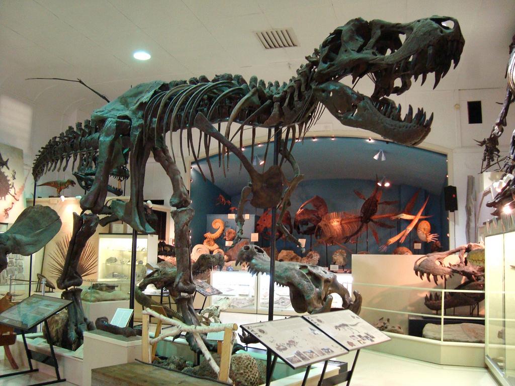 """Tyrannosaurus rex   specimen BHI 3033 """"Stan"""" Museum at Black Hills Institute, Hill City, SD"""