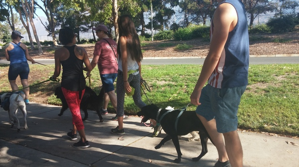 FREE community Pack Walks! ALLpooches are welcome.  - Pack walks are a safe way to socialize your doggo's in a controlled environment. We meet every Sunday morning @ Kenyon Park. Plus we get BadAss Coffee Afterwards!