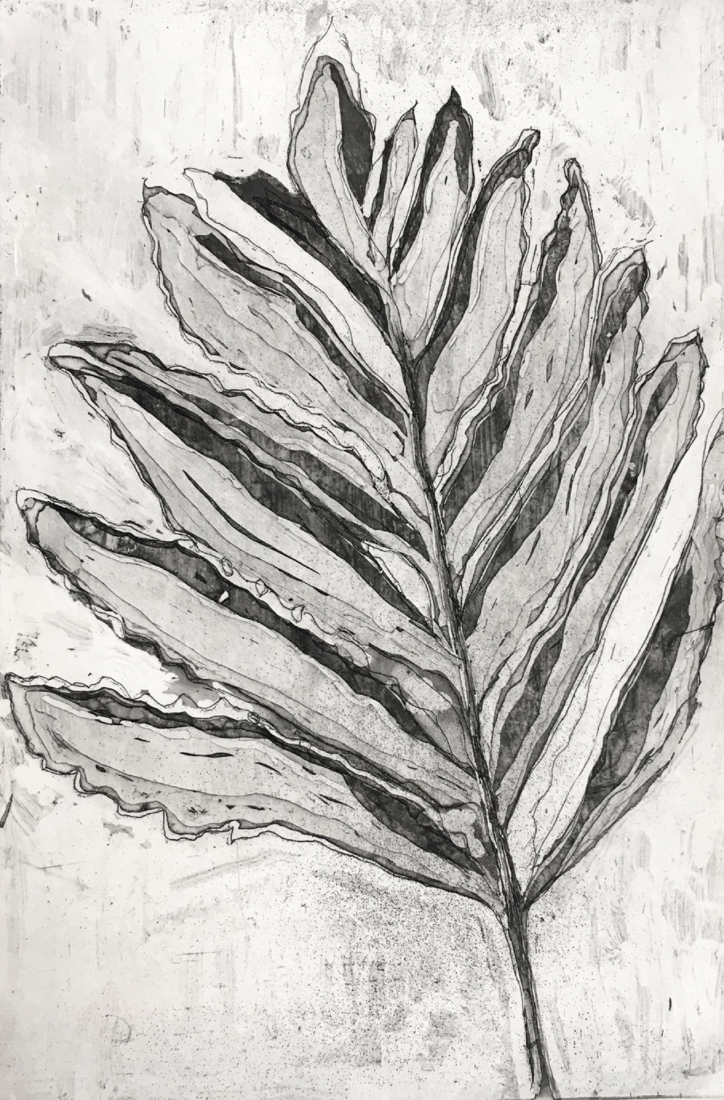Large Leaf Fern