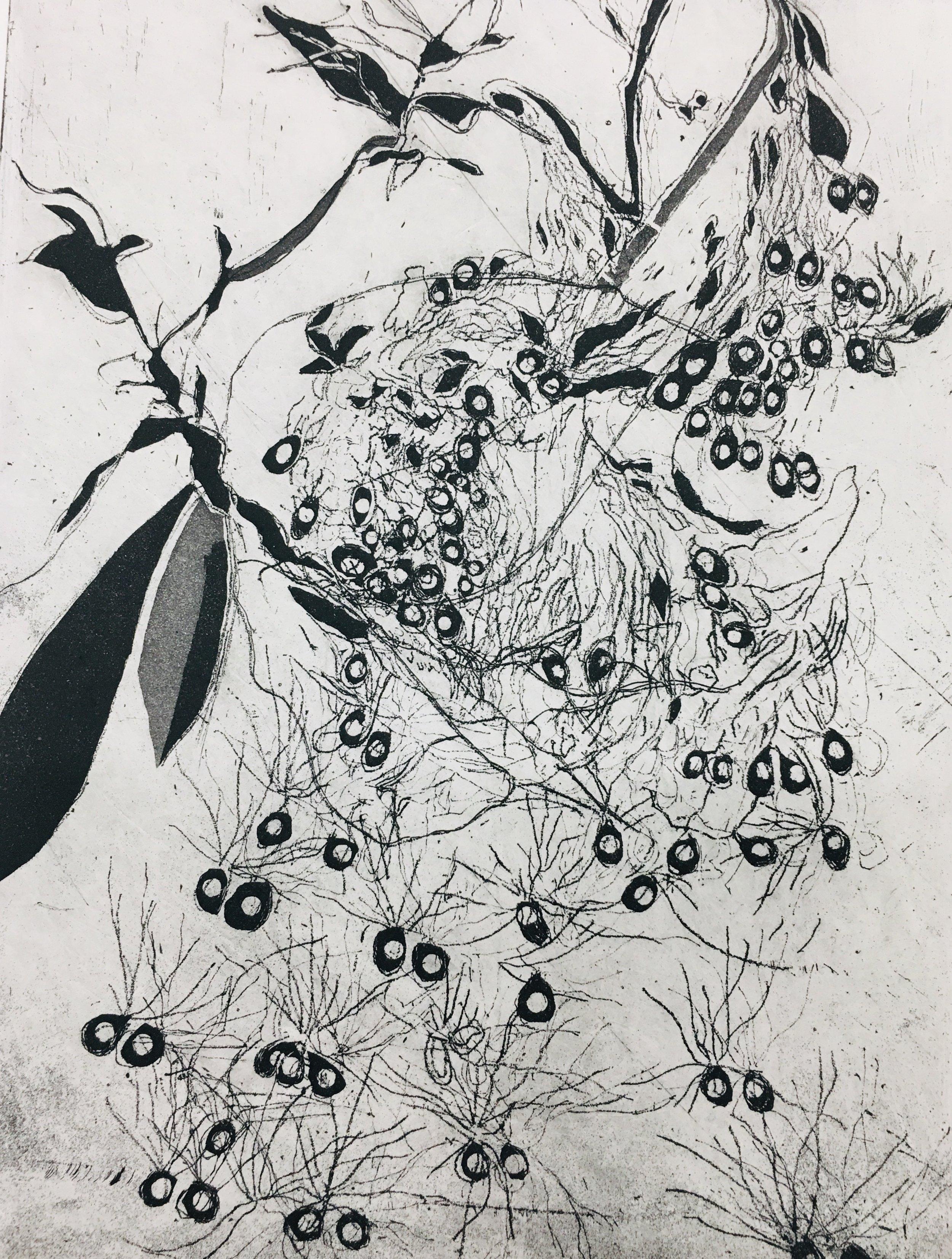 """Milkweed Seedlings copper intaglio etching 12"""" x 14"""""""