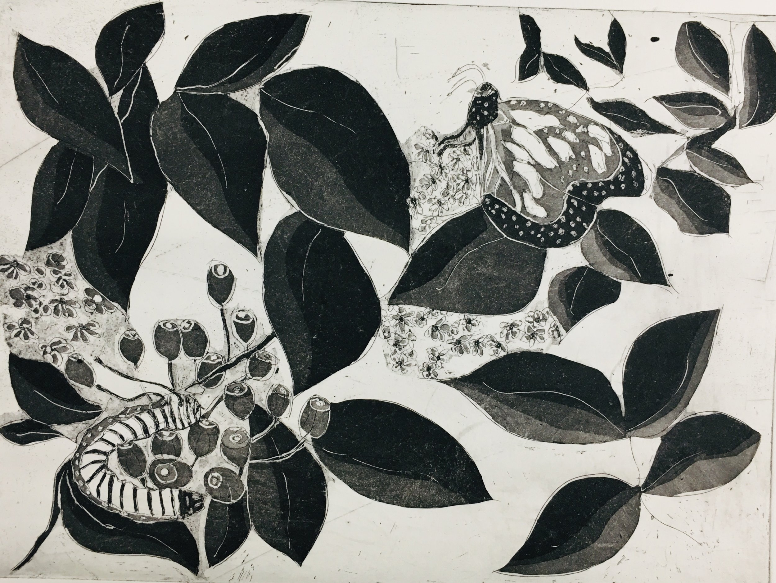 """Cocoon and Butterfly copper intaglio etching 12"""" x 14"""""""