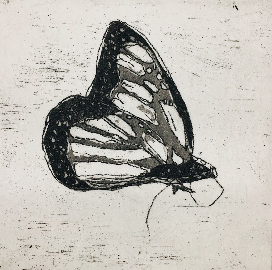 "Monarch copper intaglio etching 3"" x 3"""