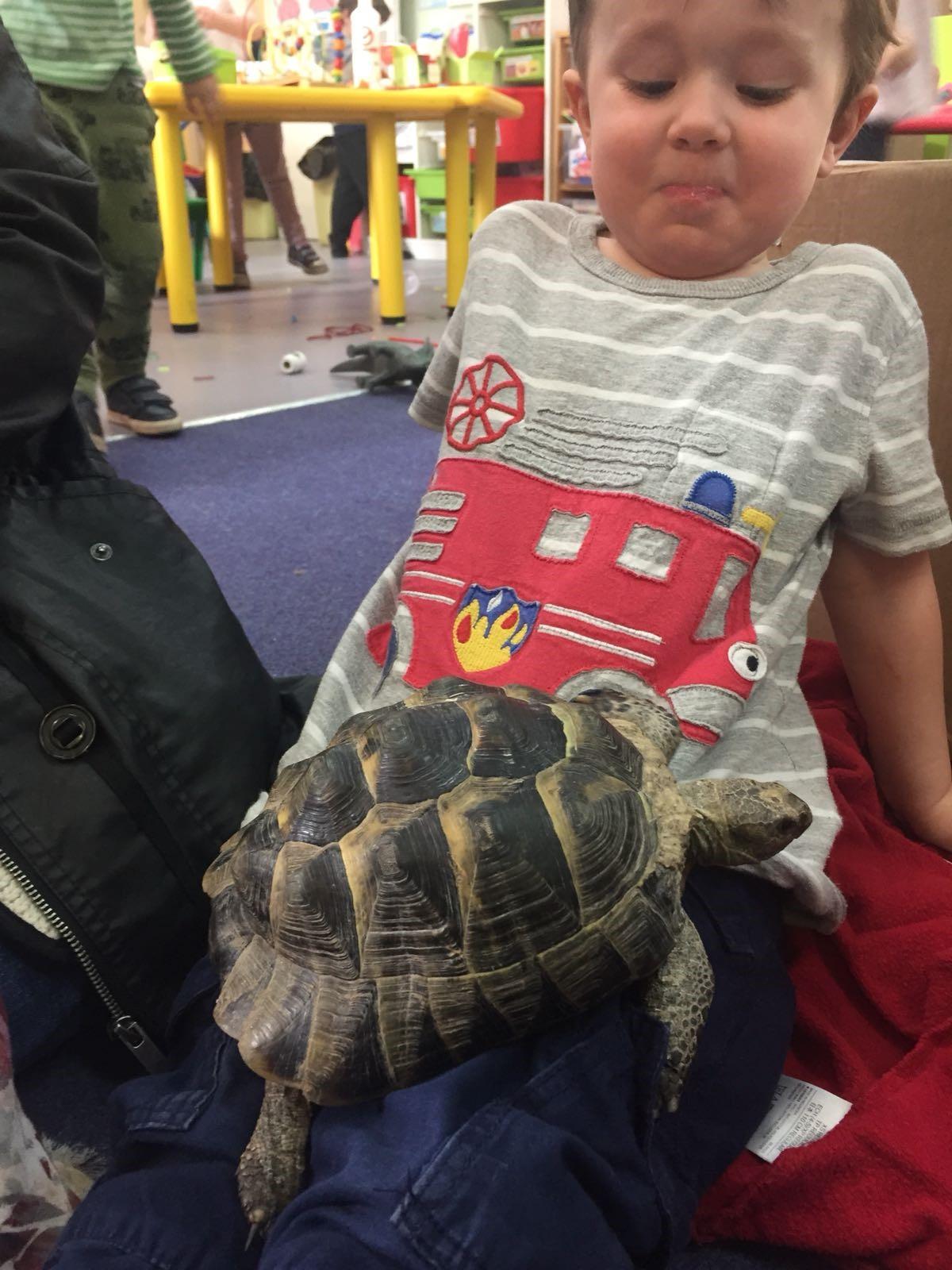 tortoise 1.jpg