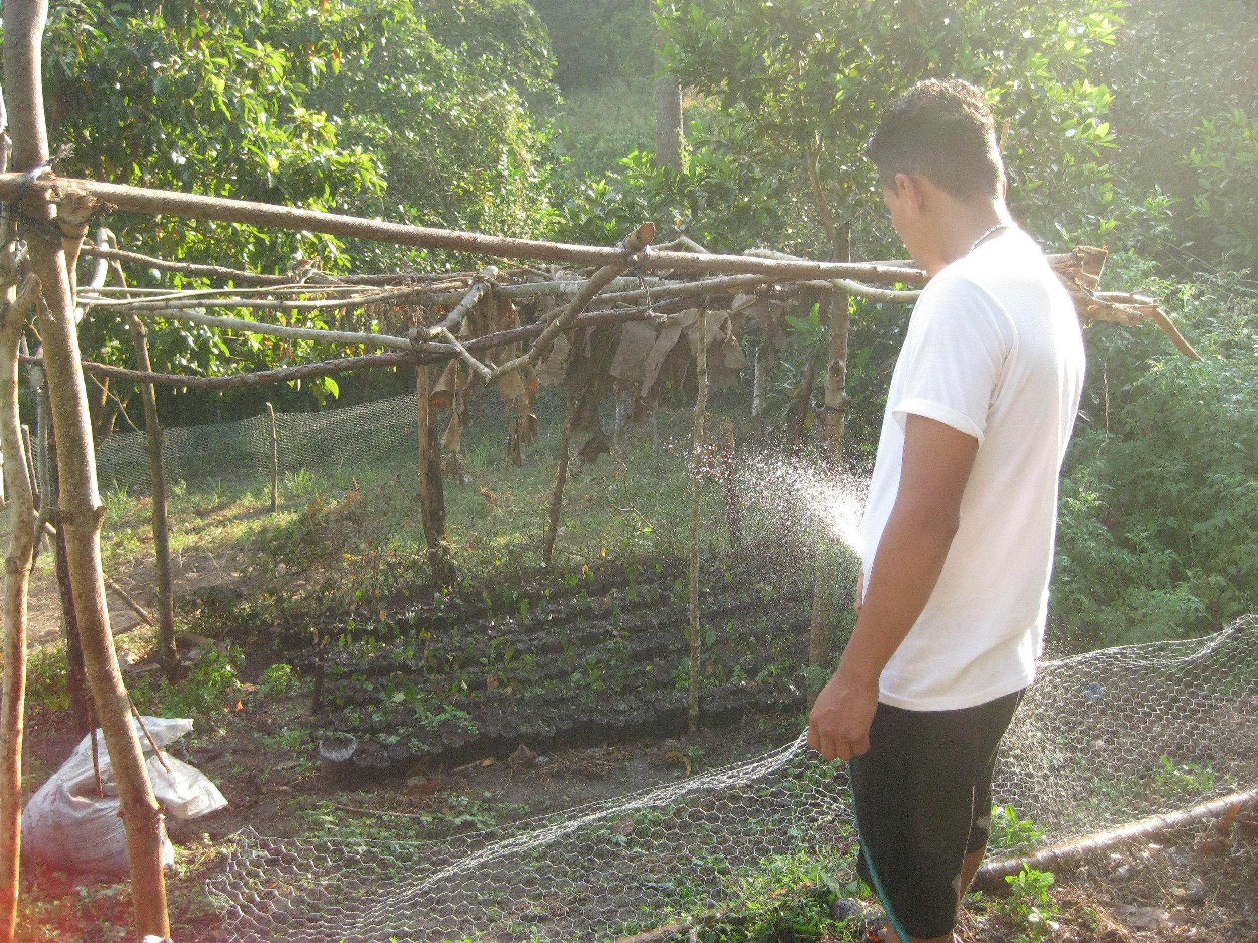 Kevin Murillo of La Majada waters a tree nursery with Masica seedlings