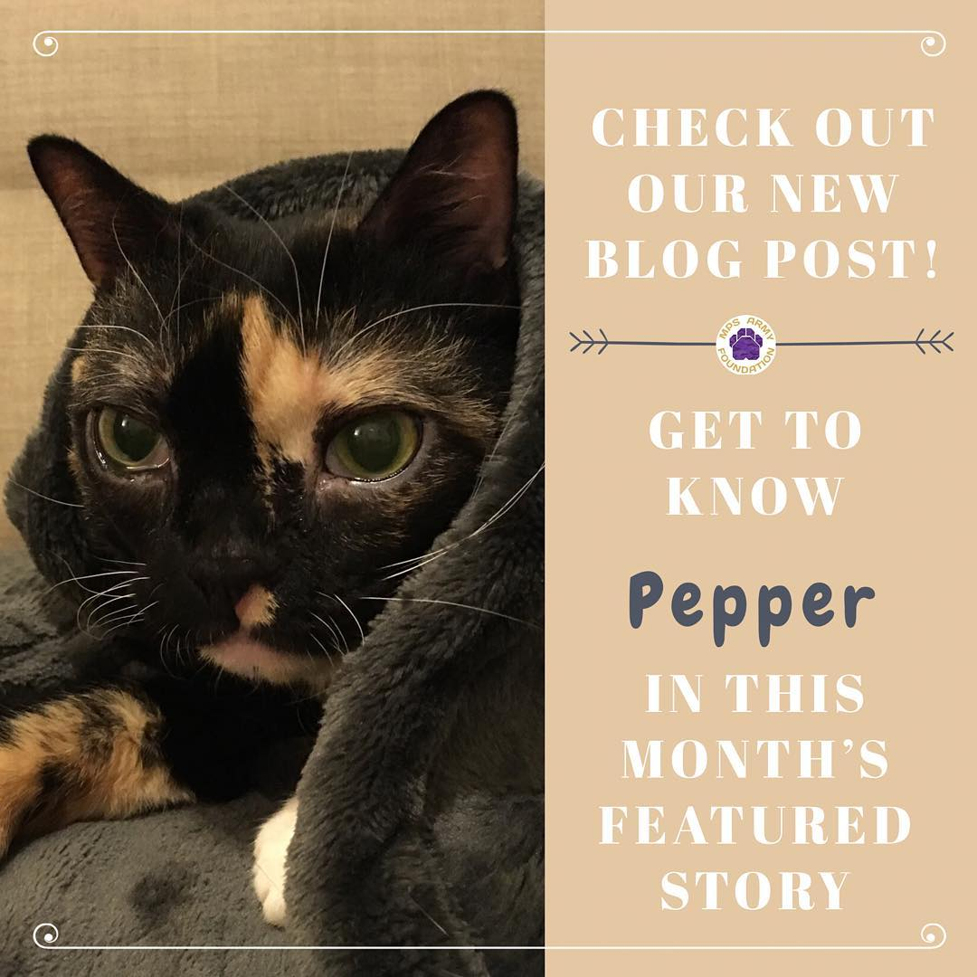 Get to know Pepper. Click the image for more!