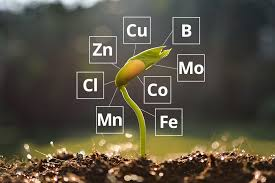 Micro nutrients are essential to our health