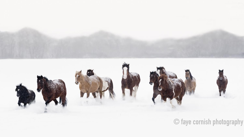 Snowy Horses