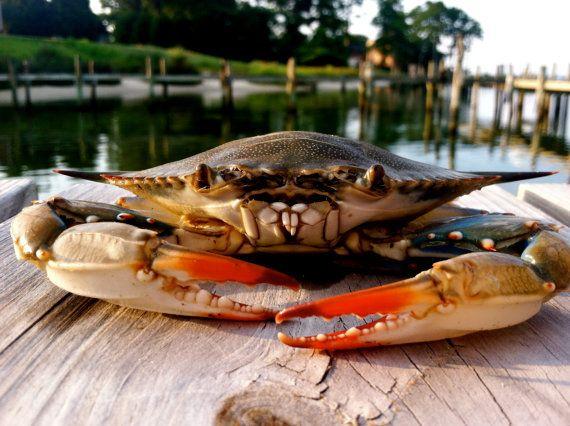 angry crab.jpeg