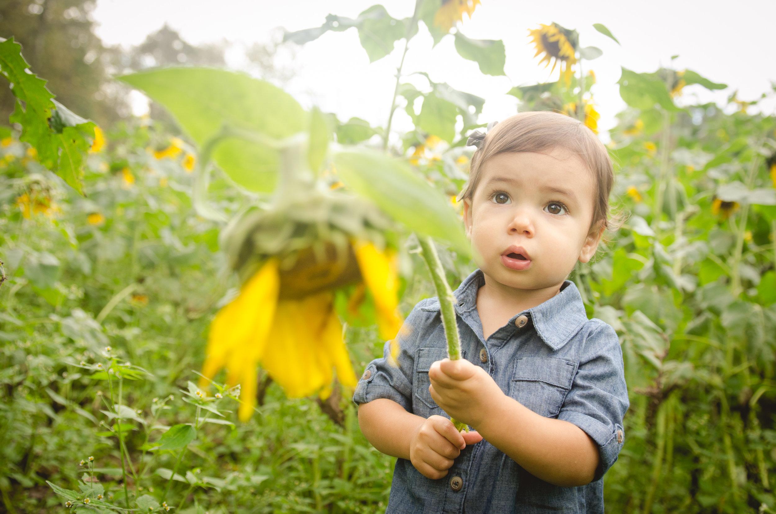 Tabors_Sunflowers-3.jpg