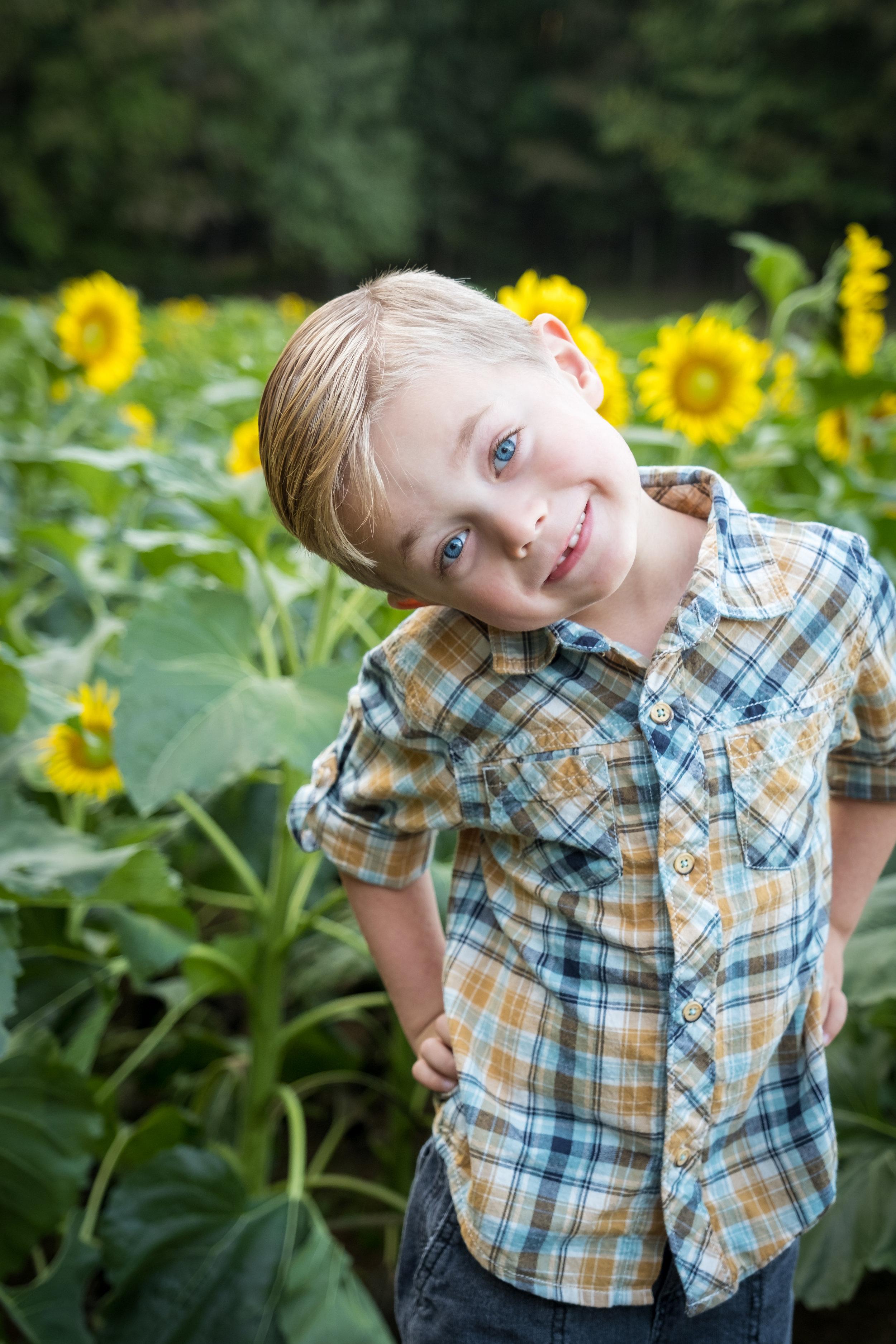 Sunflowers_fall-1.jpg