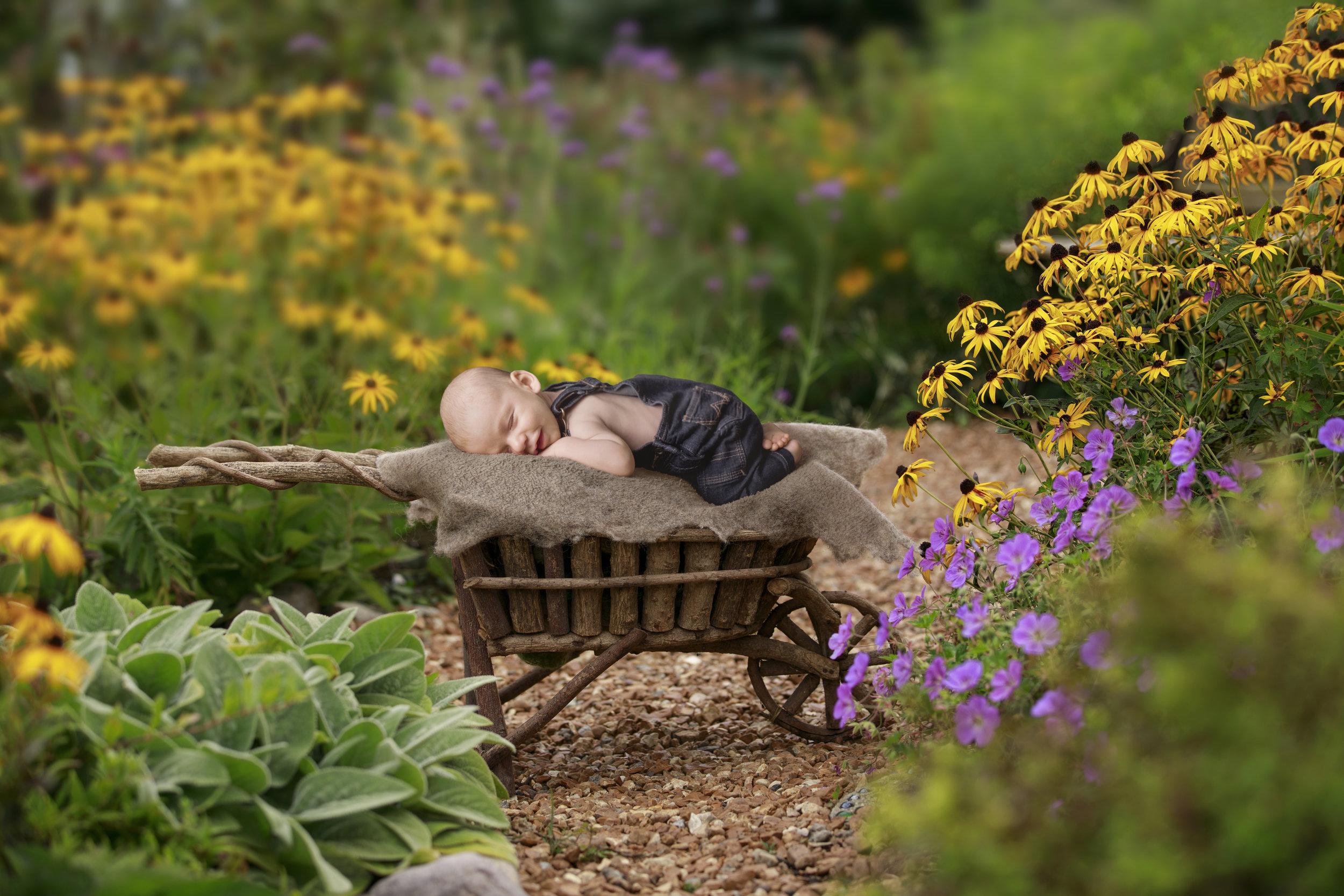 babySean_Garden.jpg