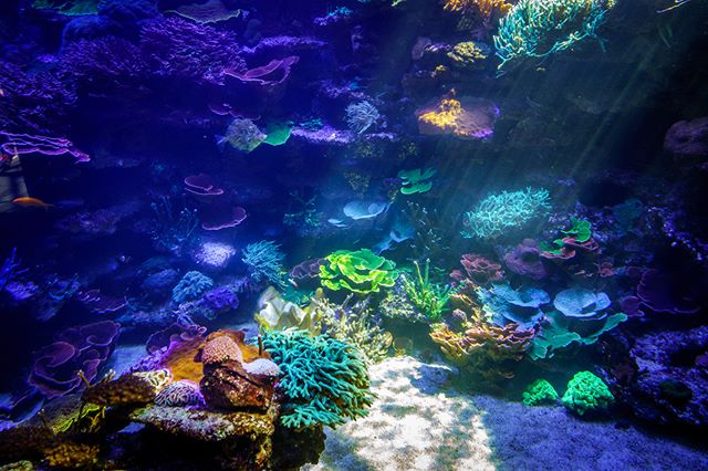 I took this picture at the Tierpark (zoo) in Bern, Switzerland. The colors of the corals were just outstanding.