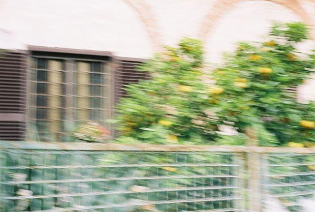 italia film dump 🍋🍊 #55mm #canonae1 #hehe