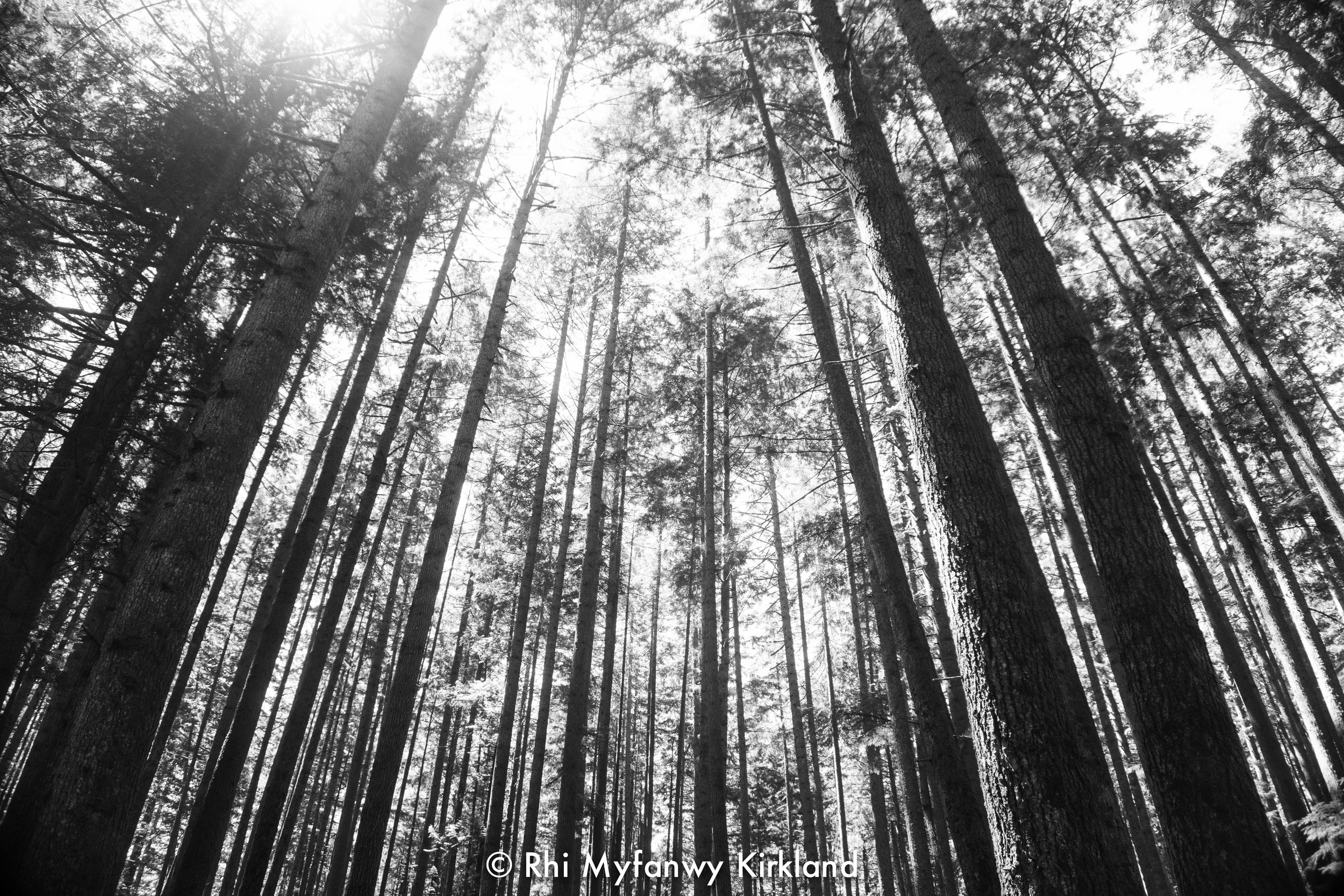 2018.07.13 trees bw watermark-4.jpg