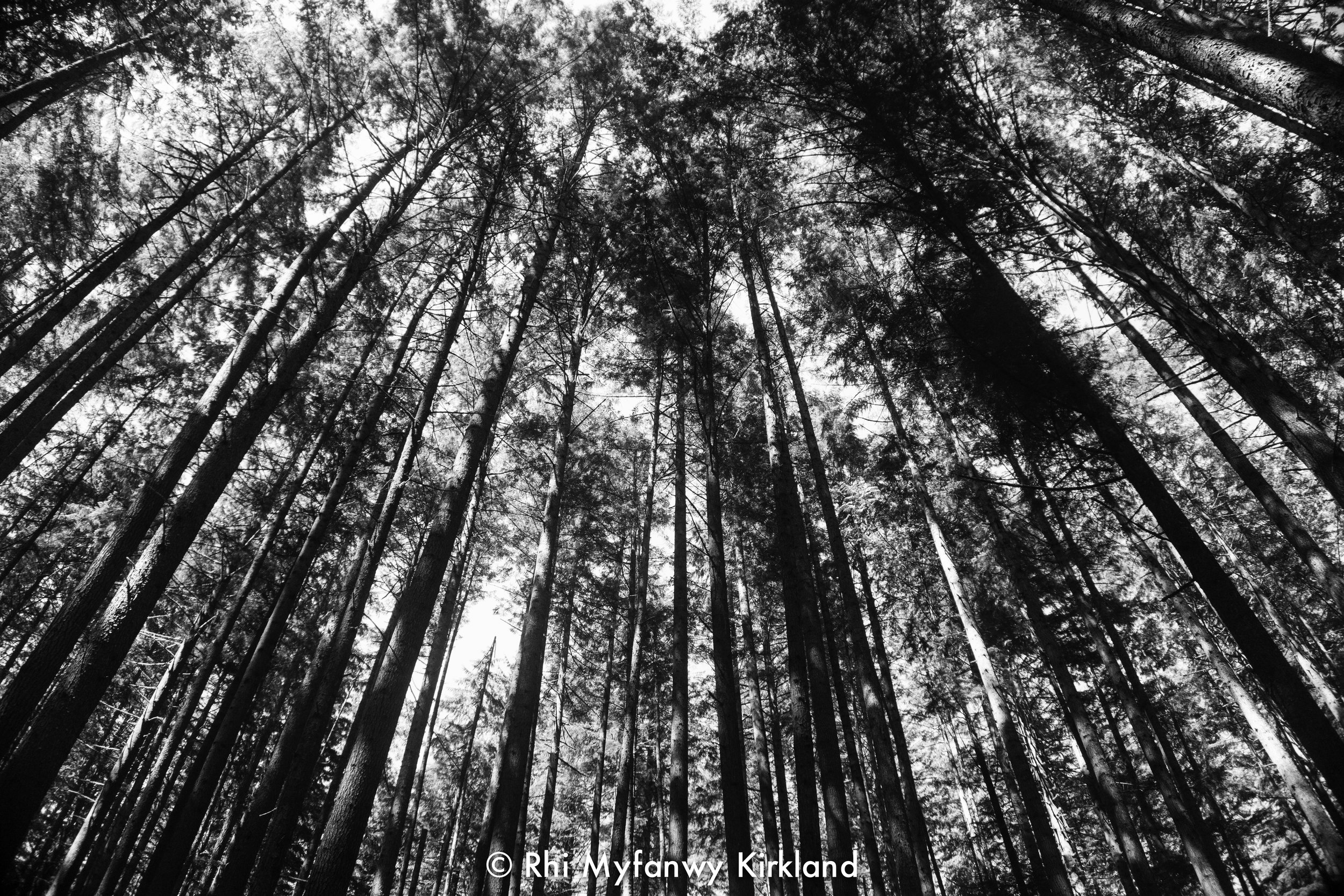 2018.07.13 trees bw watermark-7.jpg