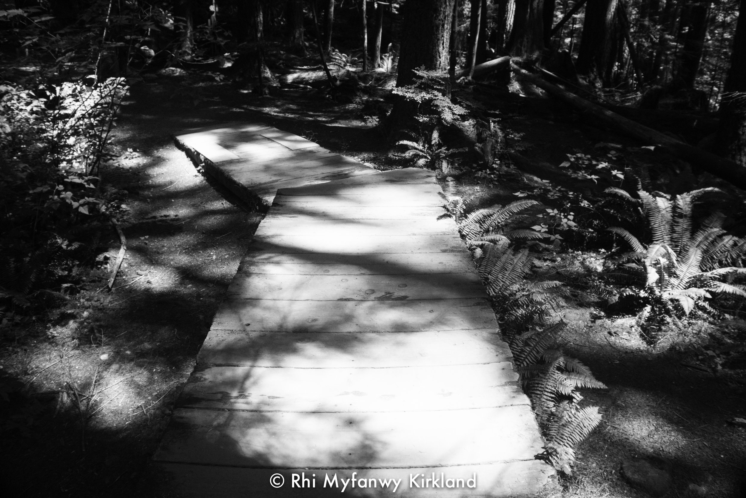2018.07.13 trees bw watermark-10.jpg