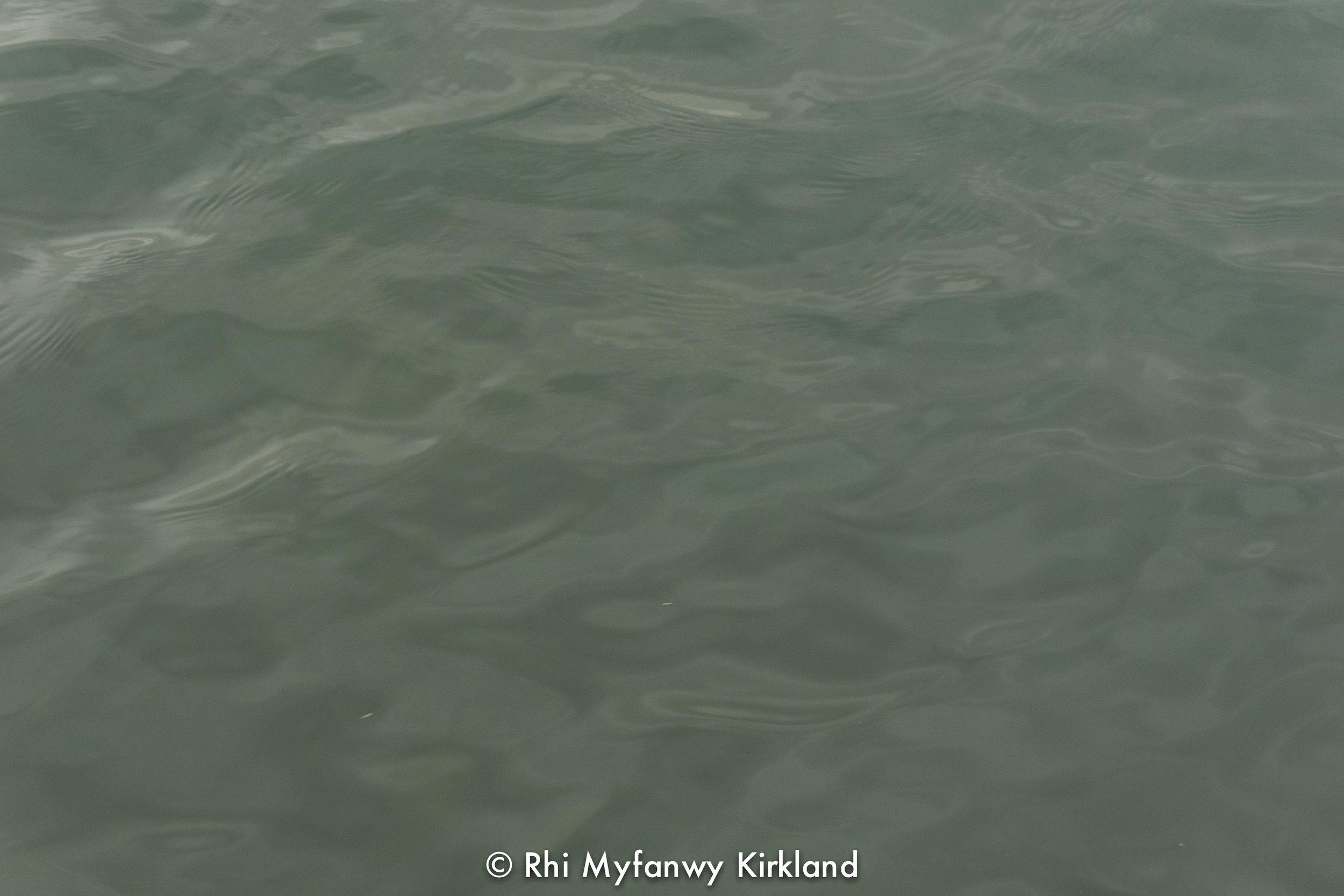 2017.09.22 watermark-4.jpg