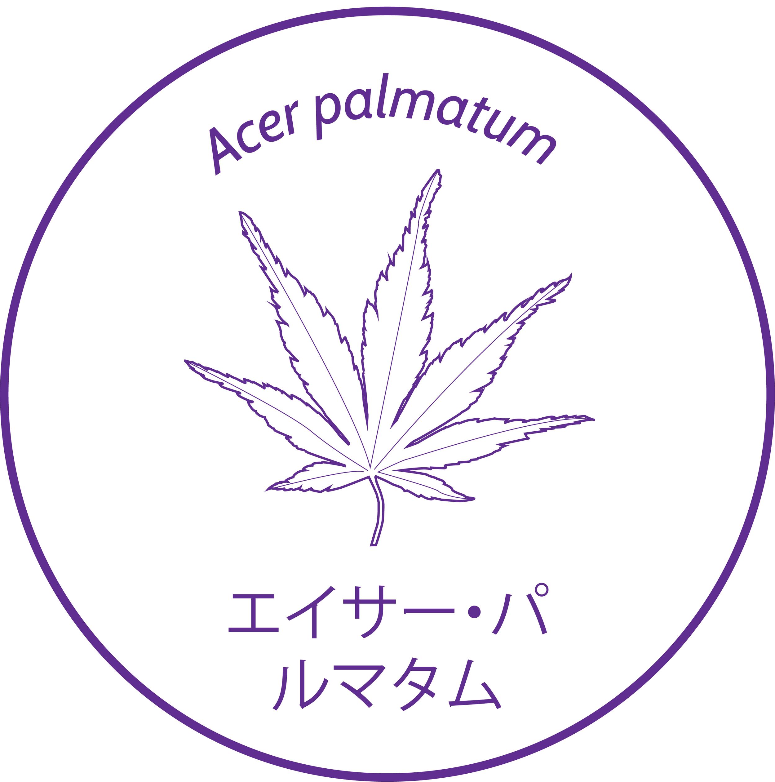 1 Acer palmatum.png
