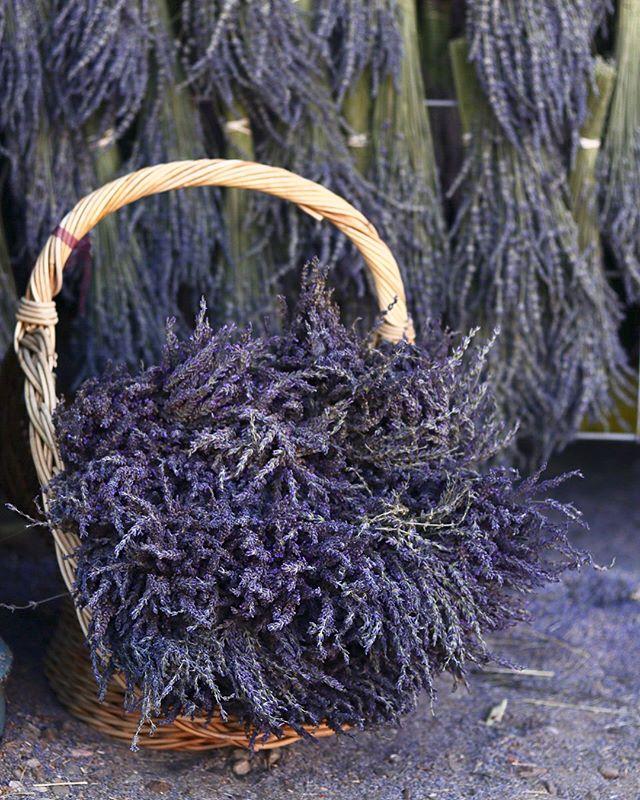 Colorado Lavender Festival - Palisade, CO 🌱💜
