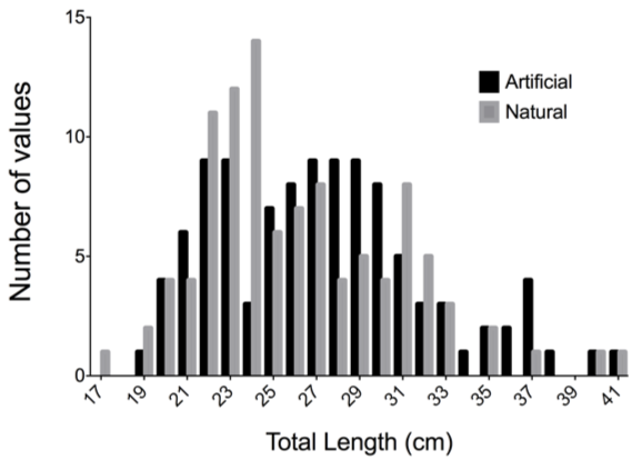 Size Distribution at Natural and Artificial Reefs  Figure 5. Comparing the size frequency distribution of BSB at artificial and natural reefs. There was no significant difference between sampled distribution based on reef type (Kolmogorov-Smirnov P = 0.13).