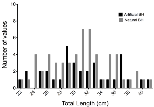Blue Head Size Frequency  Figure 2. Comparing the size frequency distribution of blue head BSB captured. The sizes of Blue Head BSB caught via angling were virtually identical at both habitats (Kolmogorov-Smirnov P = 0.93).