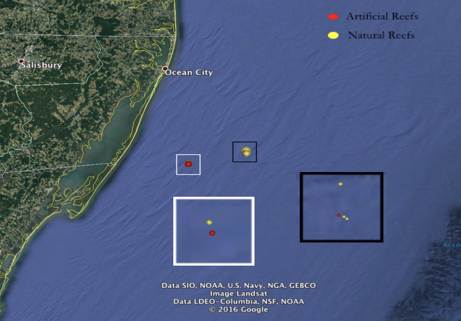 Study sites for black sea bass range from 16-32km off Ocean City, MD, between 37°and 38.5°N, at depths of 20-30m.