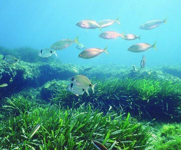 seagrass1.jpg