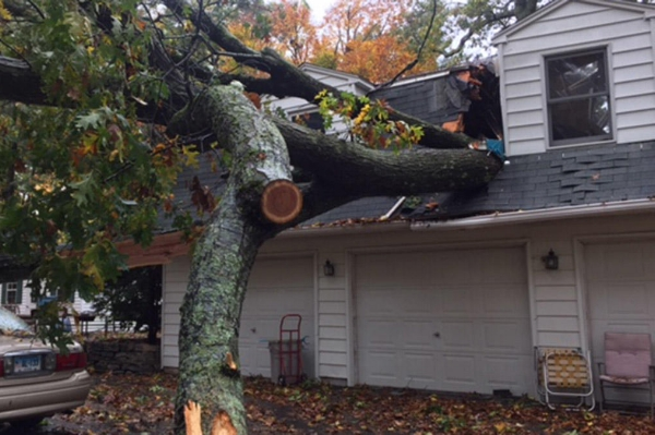Upton MA wind damage claims