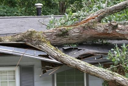 Recent Ipswich MA wind damage claim
