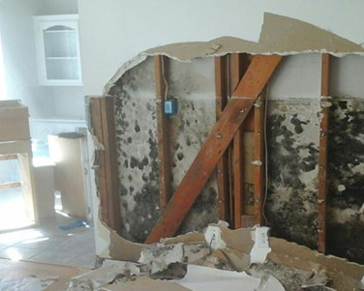 Miami FL mold insurance claim