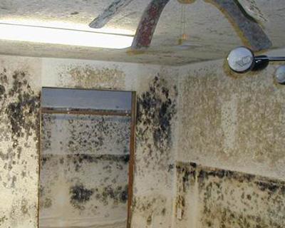 Jenson Beach FL mold insurance claim