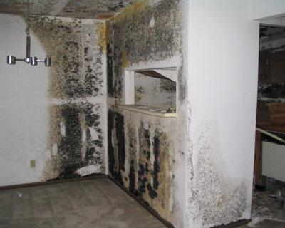 Dania Beach FL mold insurance claim