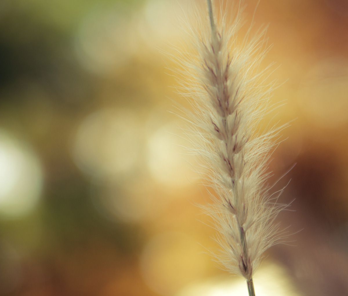 Fall Bokeh, High Park