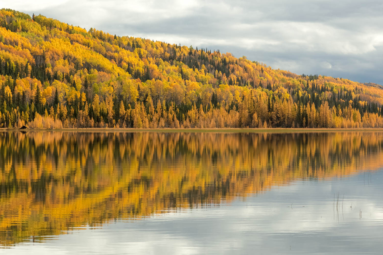 Fall Color Reflections.
