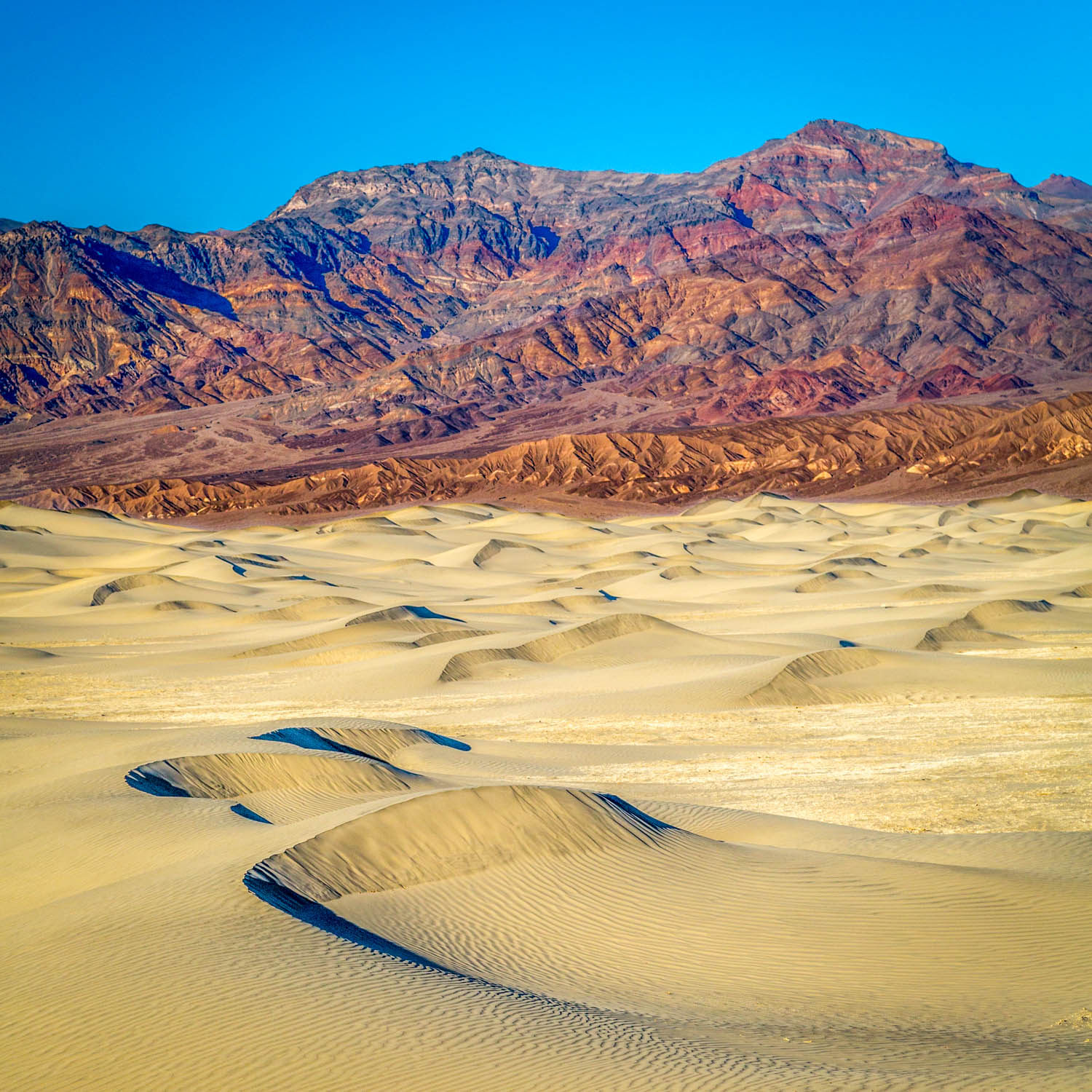 Mesquite Dunes at the Golden Hour