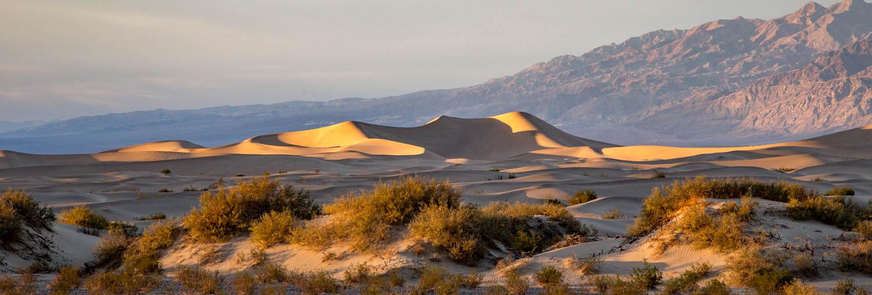 Mesquite Dunes Panorama