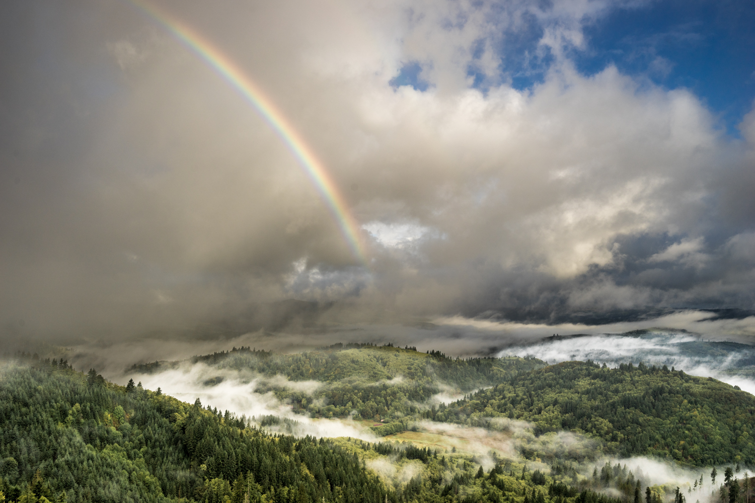 Early morning for and mist results in a wondrous rainbow.  Deep in the forests of northwest Oregon along a logging road.