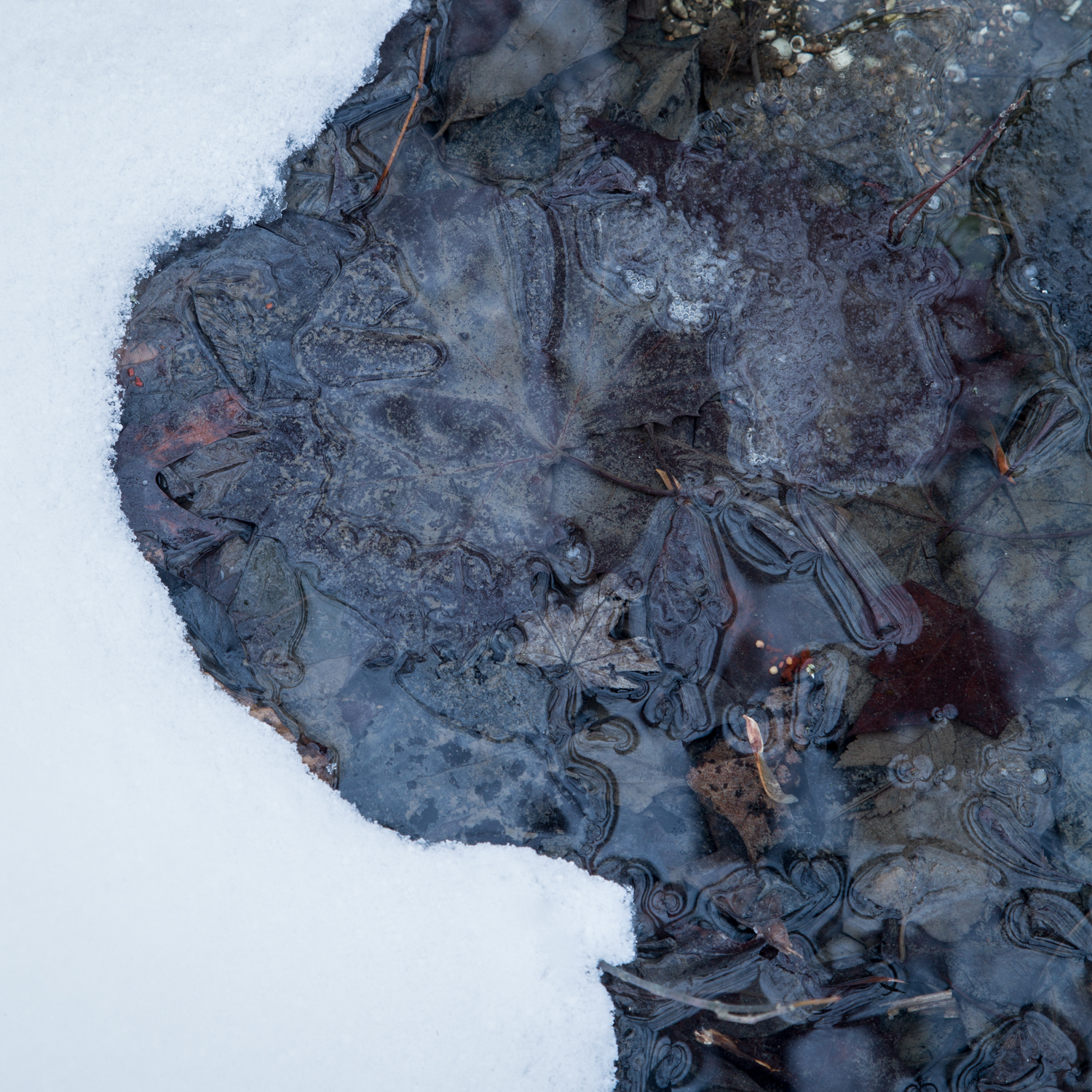 Goodale Park Pond Abstract