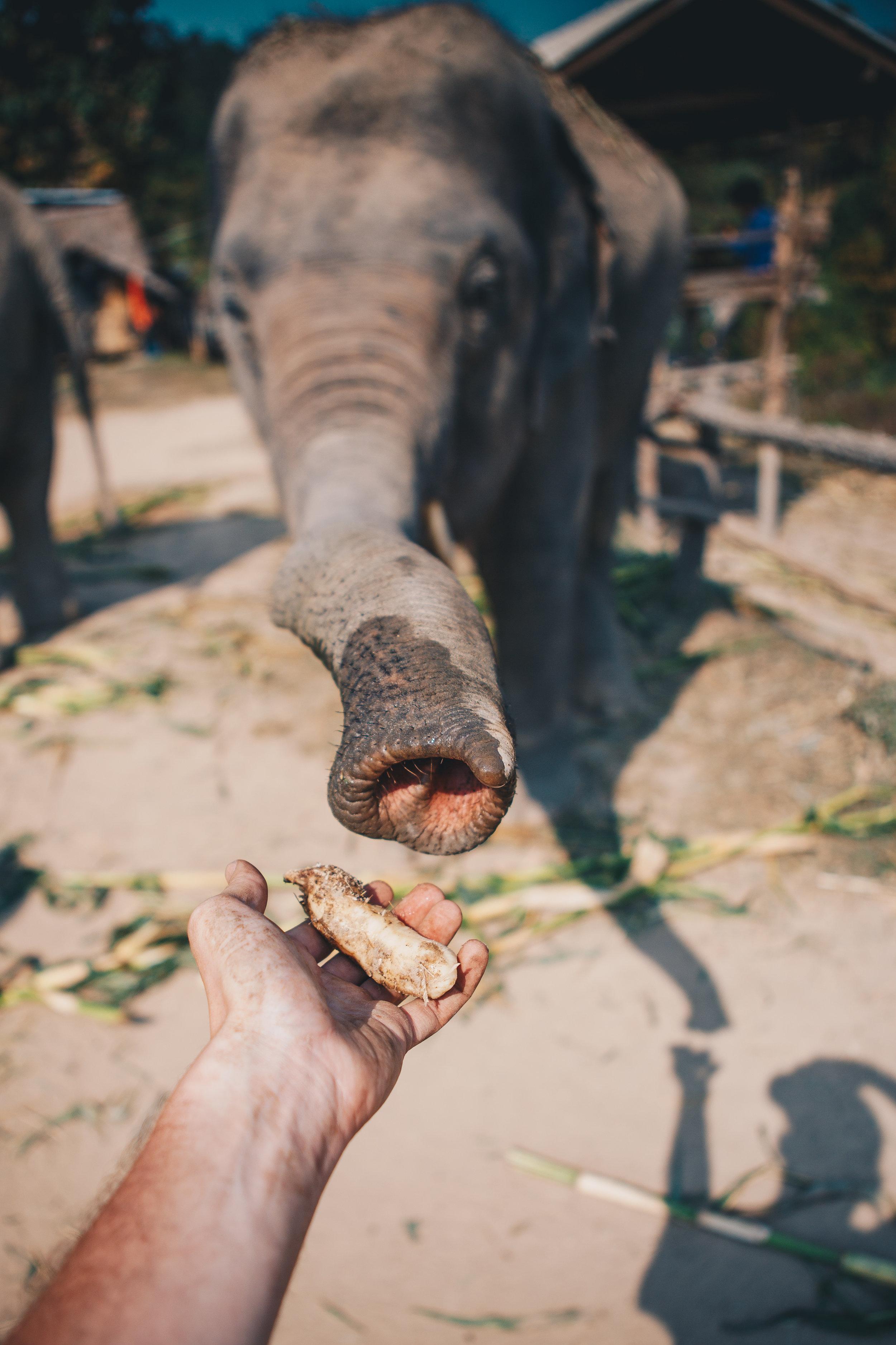 ChiangMaiDay2-1.jpg