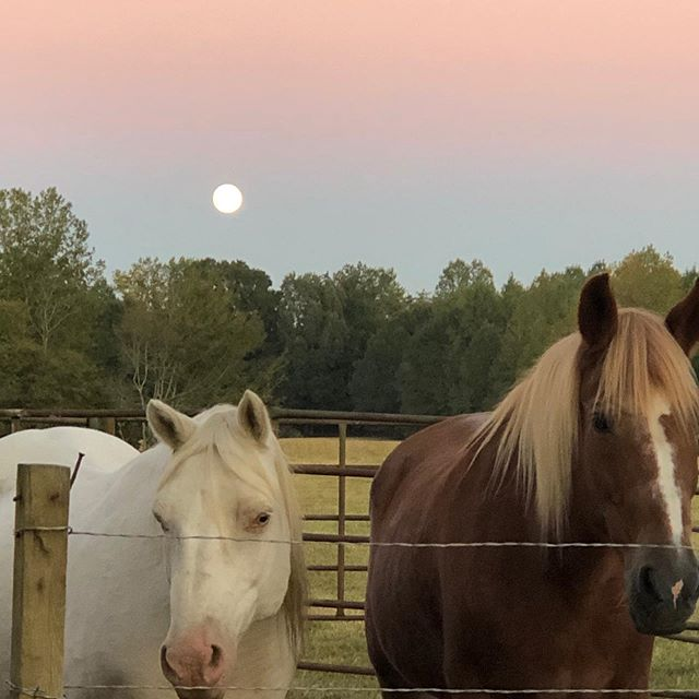 A full moon after a full day of work! #artistoninstagram #artists #lifeonthefarm #farming #horses #neveradullmoment #tennessee