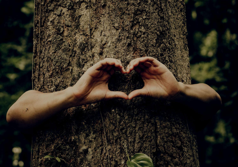 tree heart hug_resized.jpg